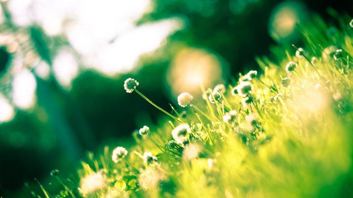 jardin sans pescticides