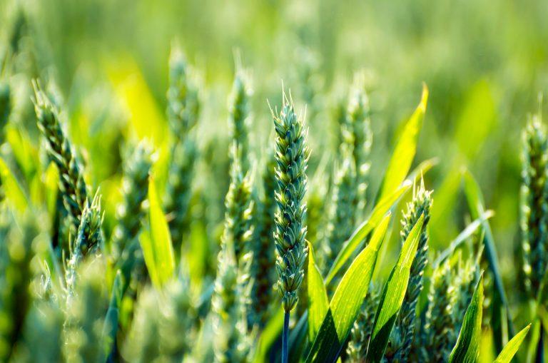 Le secteur agricole 3.0