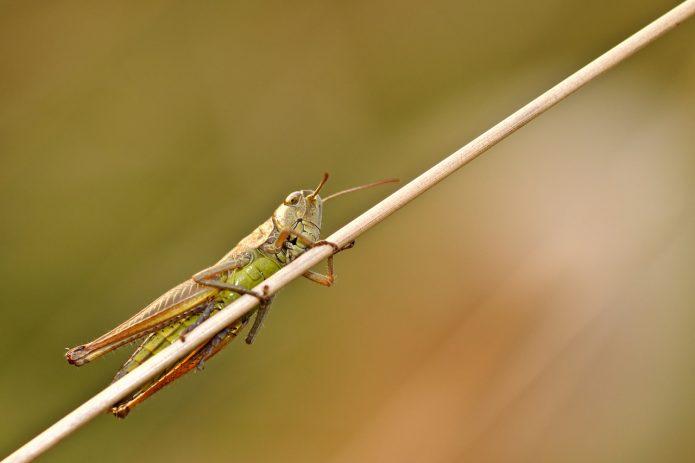 Insecte alimentation