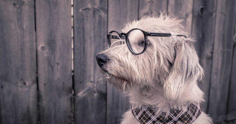 L'émergence de l'innovation dans le marché des animaux de compagnie