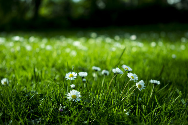 GreenTech: Mini Green Power ouvre son capital