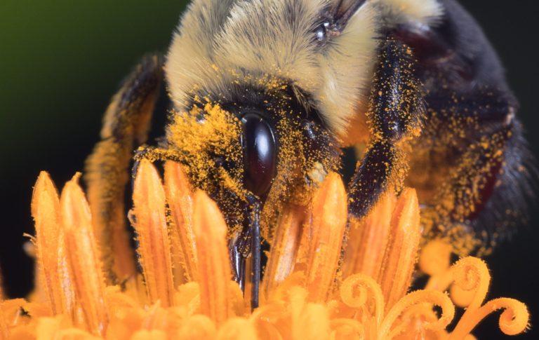 La pollinisation, un facteur à maîtriser d'urgence.
