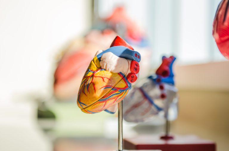 Et si l'innovation avait un rôle à jouer contre les maladies cardiovasculaires ?